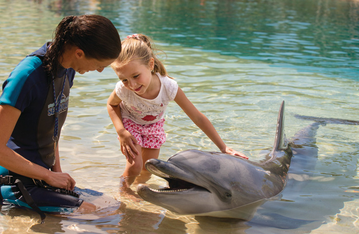 Meet the dolphin encounter girl