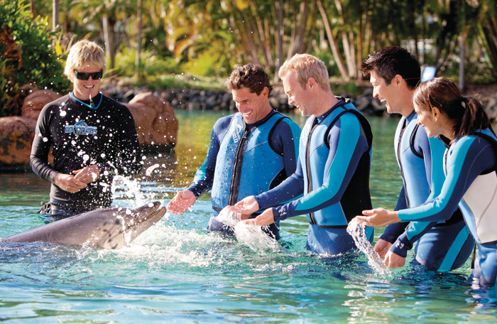 Sea World dolphin encounter